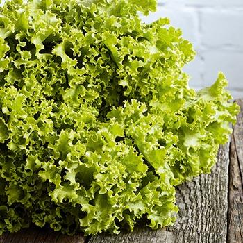 Salāti Gentile 2šķ.Latvija